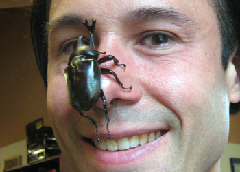 Face-to-face with a japanese unicorn beetle at University of Montana Beetle Lab